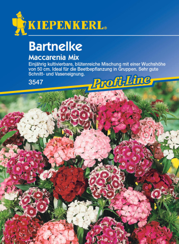 Kiepenkerl Bartnelke Maccarenia Mix 1 Portion
